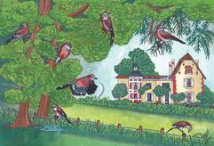 Les geais, carte postale