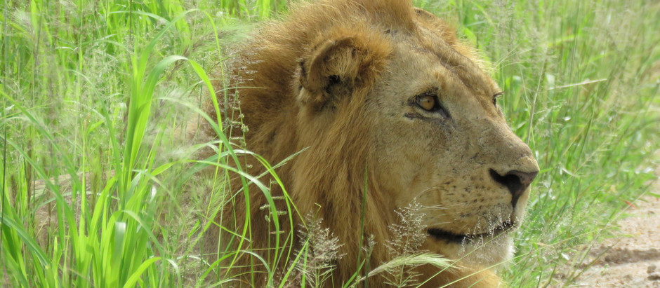 The Road to Ruaha - Blog #13 (Tanzania)