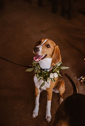 Tarik_Katie_Wedding-154.jpg