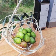 olivesimge.jpg