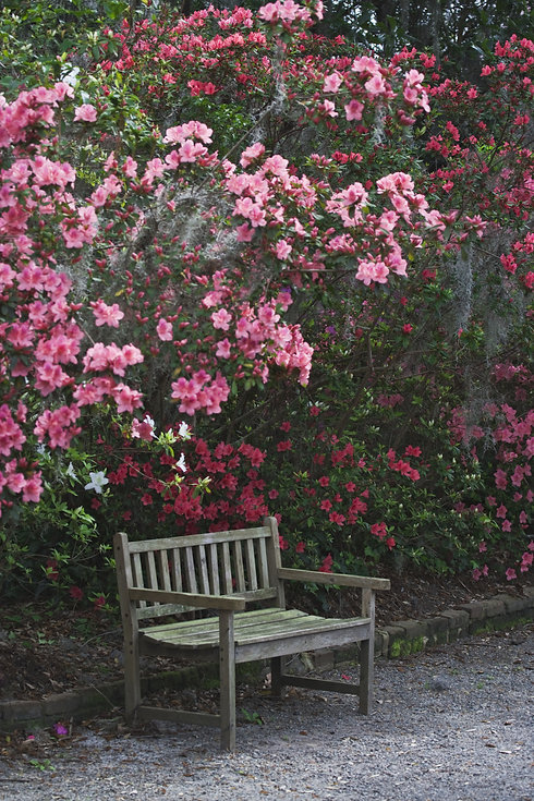 bench and flowers in South Carolina.jpeg