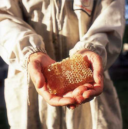 דבוראי מחזיק ביד יערת דבש במשק לין