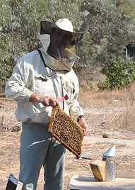 דבוראי רודה דבש בשטח