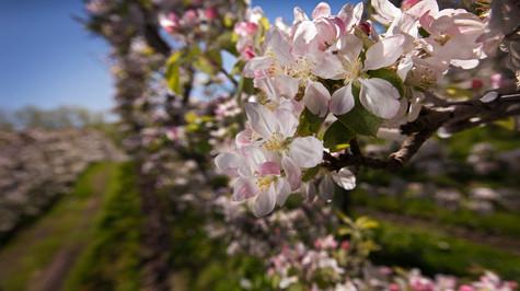juicy2012_apples_157_rt2 copy.jpg