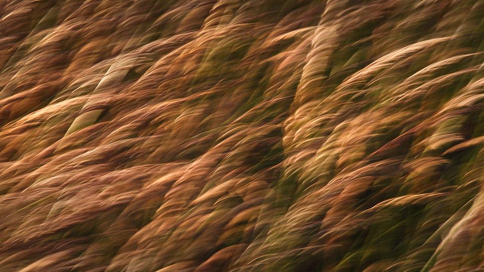 Fields Tasmania 1