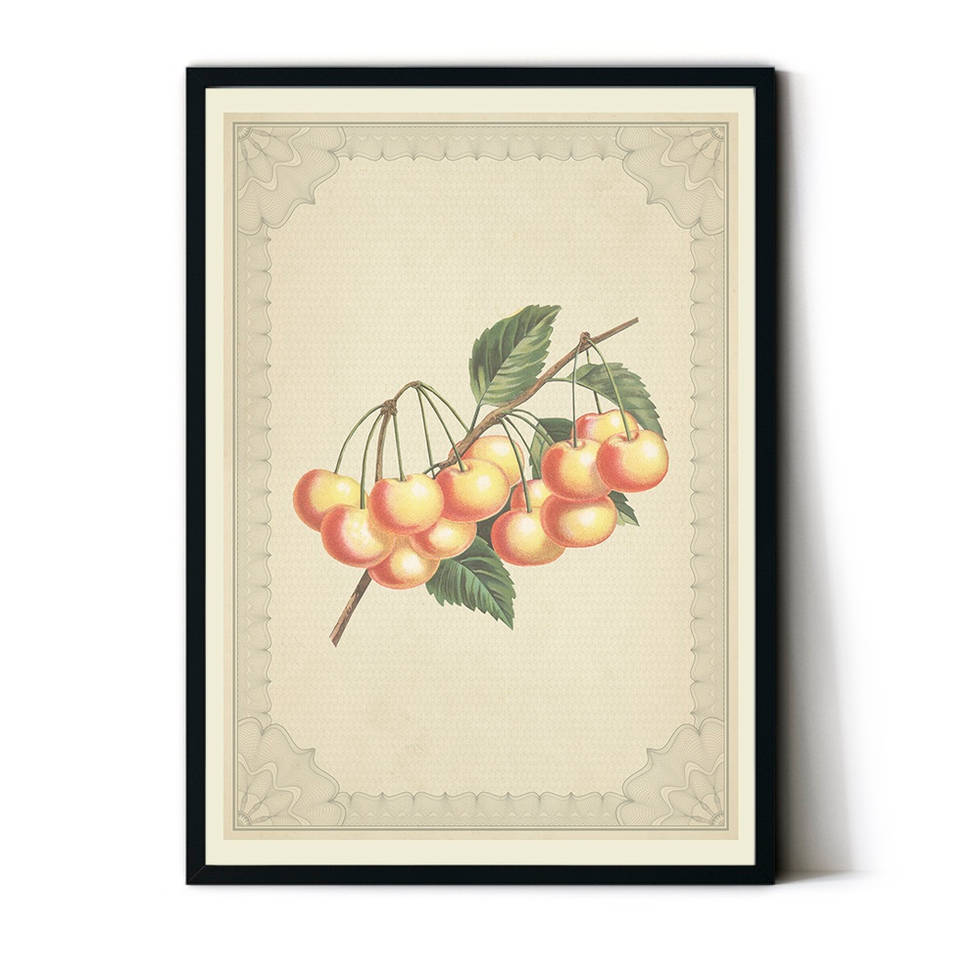 art poster Cherry vintage design