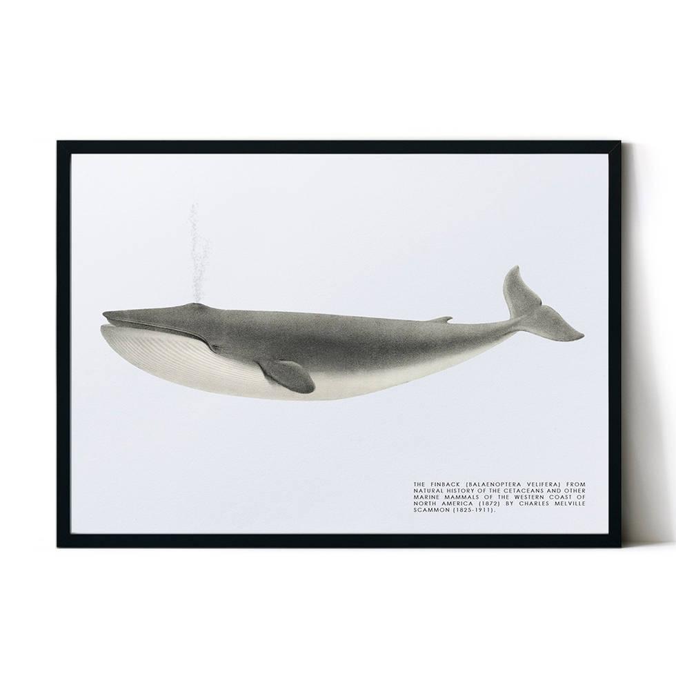 art poster whale design