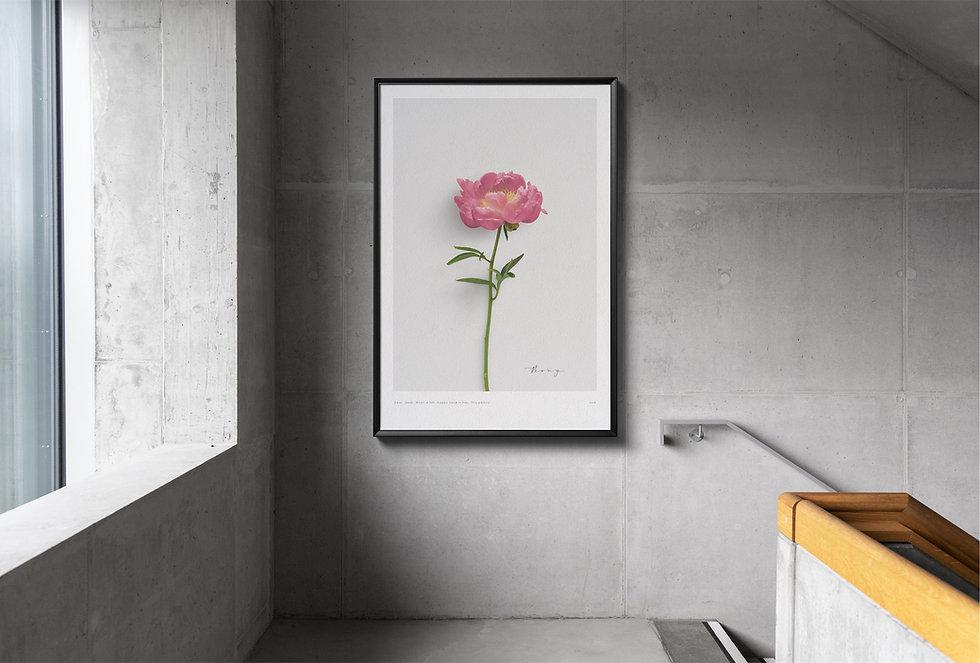 art poster botanical peony
