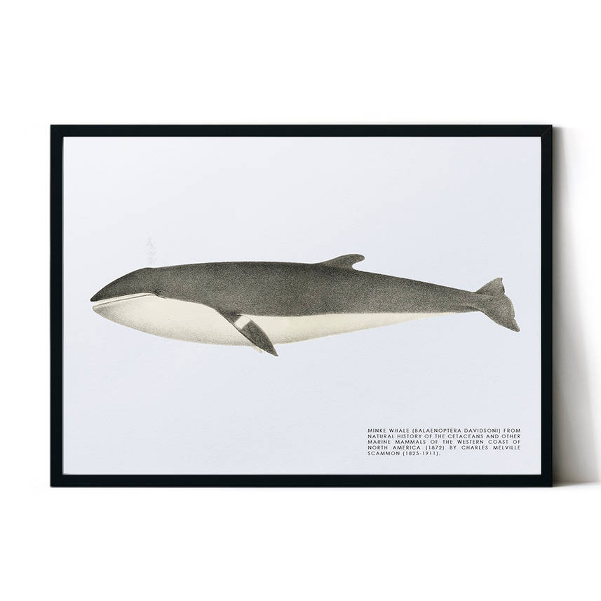 art poster whale design