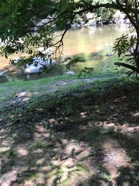 Three Trees Creek View