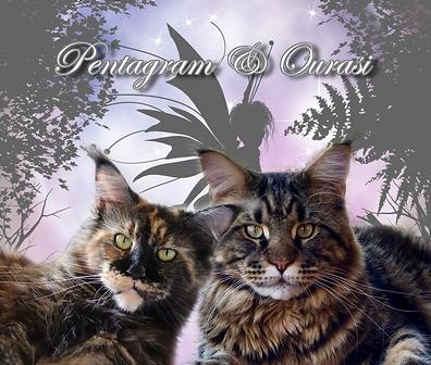 Pentagram x Ourasi.png