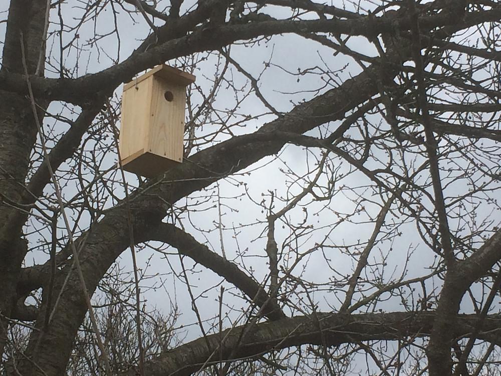 B típusú madár odú a cseresznyefán