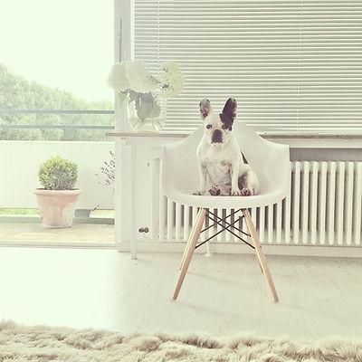 Wohnung Köln Rodenkirchen kaufen mieten Hund Hunde