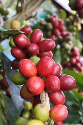 Sumatra マンデリン ビンタンリマ