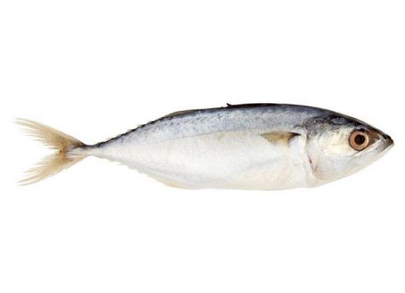 Ikan Kembung (Kg)