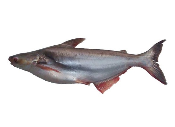 Ikan Patin (Kg)
