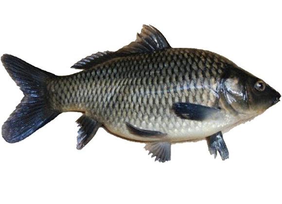 Ikan Mas (Kg)