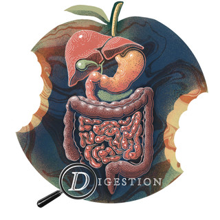 D is for Digestion