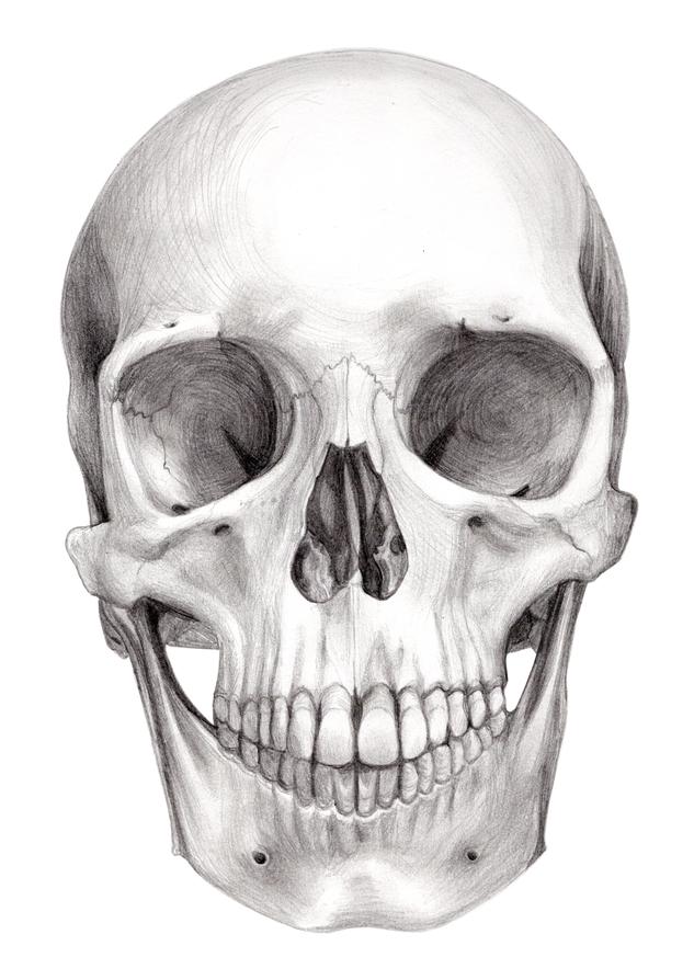 Skull, graphite
