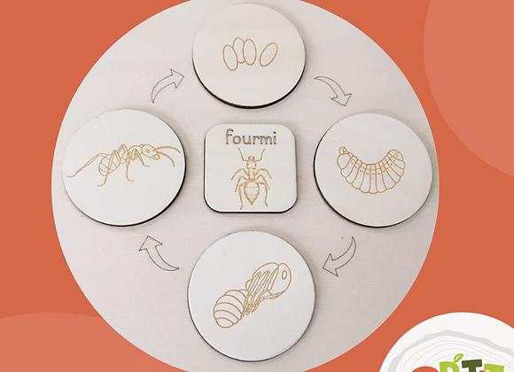 Plateau seul - La fourmi