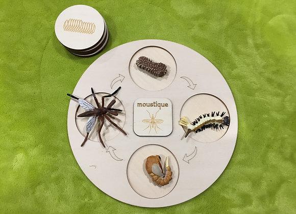 Plateau complet - Le moustique
