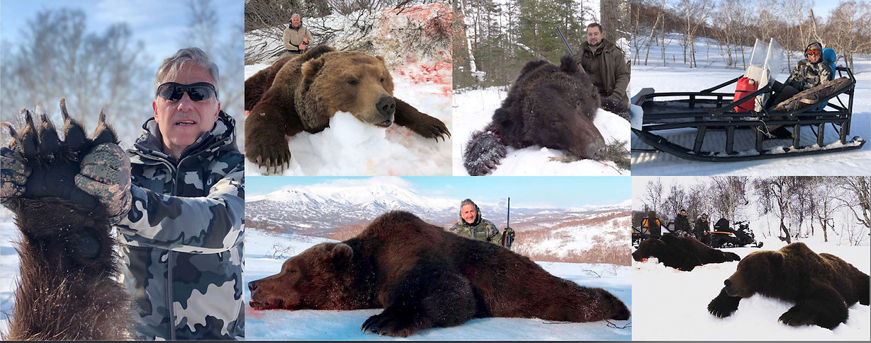 kamchatka  brown bear , oso pardo banner