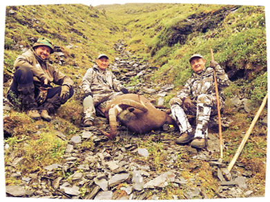 cochinos tadjikistan caza batidas