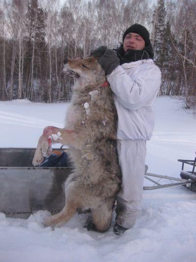 wolf 001 400.jpg