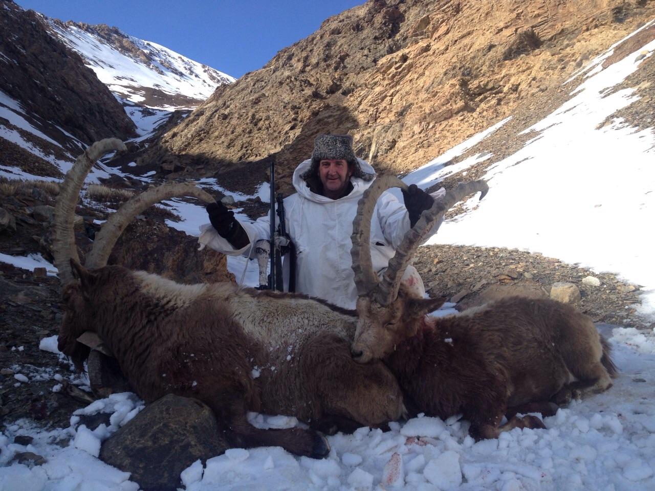 Ibex en  kirgizstan