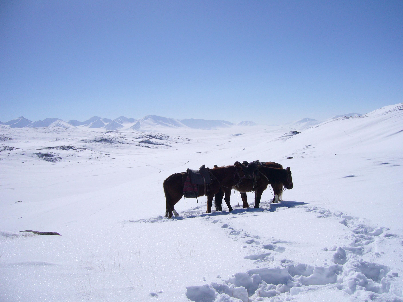marco polo kirgizstan