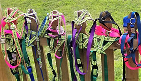 Picture of donated harnesses