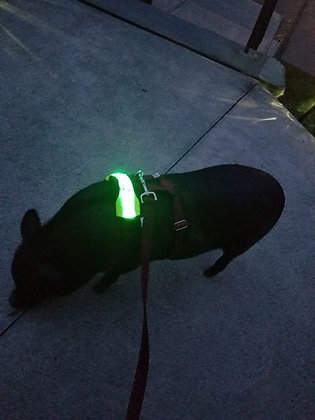 Mini Pig Harness Lighted Reflective Collar Light