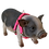 Thumbnail: Wingz© No-Step-In Pig Harness