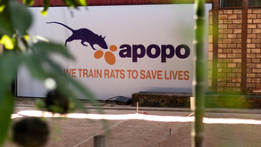 APOPO - meeting the rats who change lives