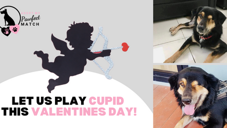 Fetching Love For Rescue Dogs This Valentine's Day!