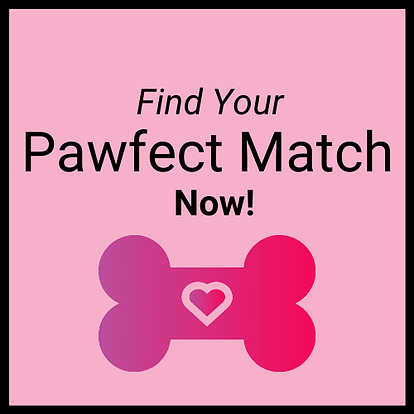 Find your PAwfect Match Button.png