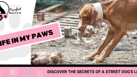 DISCOVER THE SECRETS OF A STREET DOG'S LIFE