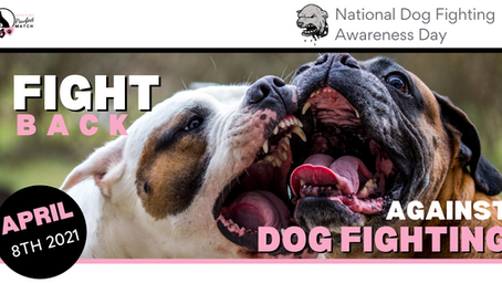 How to FIGHT back against dog fighting!