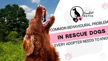 Common behavioural problems in rescue dogs every adopter needs to know!