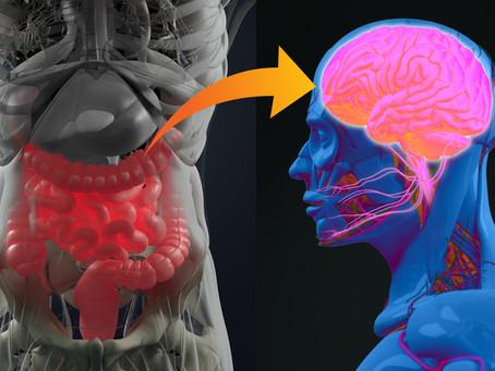 Microbiote intestinal, cerveau, dépression et système immunitaire.  Et si tout était lié ?