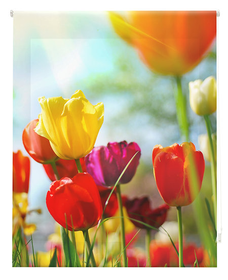 Estor Digital Naturaleza Tulipanes