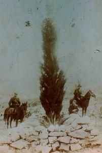 ברוזה רוכב משמאל, וולפסון ליד הדקל