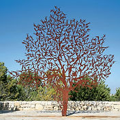 For is the Tree of the Field Man, Zadok Ben-David