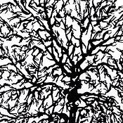 Autumn Shadow,  Zadok Ben-David