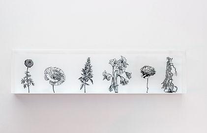 Blackflower Boxes,  Zadok Ben-David