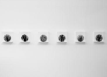Flower boxes,  Zadok Ben-David