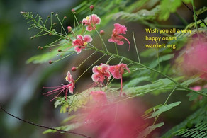 Wish you all a very happy onam: warriers.org