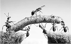 Developing Strength (Ants).png