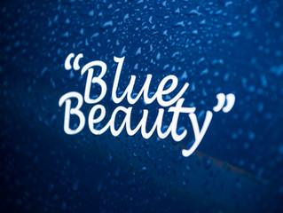 """Blue Beauty"" never fails"