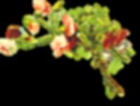 Garden of Eden (7).png